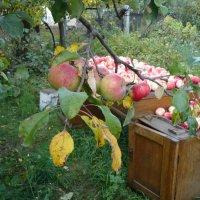 Урожай :: натальябонд бондаренко