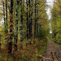 Сухие листья на тропе шуршат... :: Наталья Лунева