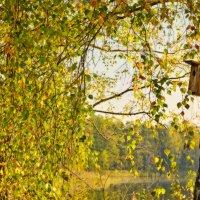 Дождёмся следующей весны... :: Roman Lunin