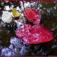 Мокрые листья.. :: Андрей Заломленков