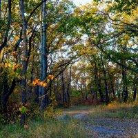 Утро в лесу осенью :: Юрий Стародубцев