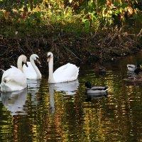 Золотоe oзеро :: AstaA