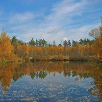 Лесное озеро. :: Марк Кутепов