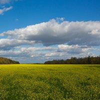 Яркие цвета осени :: Роман Царев