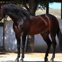 Лошадь :: Алёна Королева