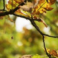 Осень :: Виктория Игнас