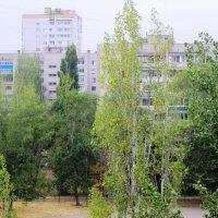Зелёный октябрь :: Самохвалова Зинаида