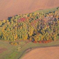 Золотая осень :: Zifa Dimitrieva