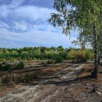 Уже октябрь, а осени все нет... :: Валерий Чернов