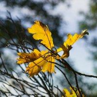 Осенние листья :: Виталий