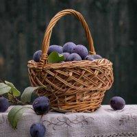 Сливовый урожай 1 :: Наталья Краснюк