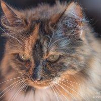 Кошка Саманта :: Роман Домнин