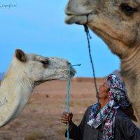 Berber. Zagora, Morocco :: Alexander Kopytov