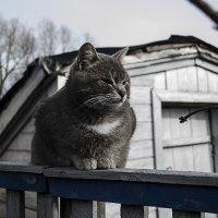 Котэ :: Андрей Калюжнов