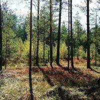 Начало октября порадовало солнечным деньком :: Елена Павлова (Смолова)