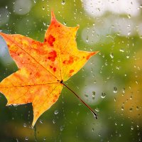 Осень :: Женечка Зяленая