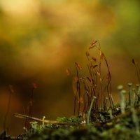 Лесные великаны :: Олег Кашаев