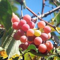 Опять на яблоне,поближе к солнышку! :: Наталья