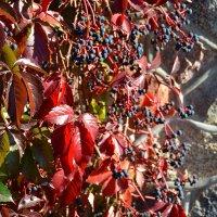 Рисовала осень красным... :: Miola