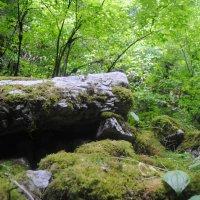 лес :: Дарья Конарейкина