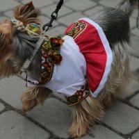 Собака - 8. :: Руслан Грицунь