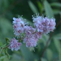 Цветы. :: Екатерина
