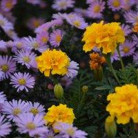 Осенние цветы) :: Наталья Мельникова