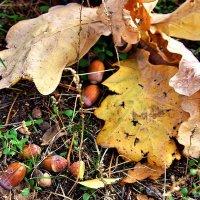 Весной пробьются из плодов ростки... :: Лесо-Вед (Баранов)