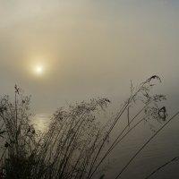 Про туман.... :: Александр Буланов