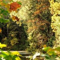 Гуляем, просто прогуливаемся, не спеша по осени. :: Владимир Гилясев