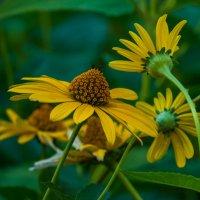 Цветы :: Андрей Воробьев