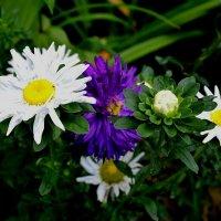 Цветы в октябре :: Милешкин Владимир Алексеевич