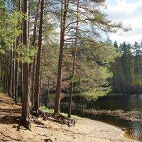 У озера :: Елена Павлова (Смолова)
