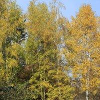 Осень. :: Андрей