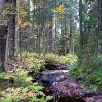 Ручей в лесу :: Вера Щукина