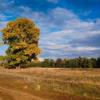 Осень Сросты :: Grishkov S.M.