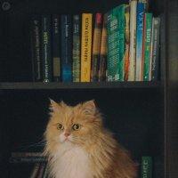 Умный кот :: Евгения Фролова