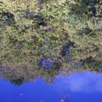 Осеннее зеркало 1 :: Марина Домосилецкая