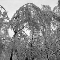 Такого снегопада... :: Андрей Зенков