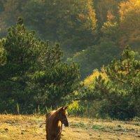 Лошадь :: Сергей Ермаков
