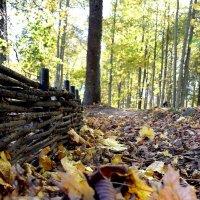 Осенние листья. :: vkosin2012 Косинова Валентина