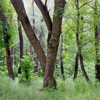 А в лесу они лишь вдвоем, не деревья, а он и она… :: Валентина ツ ღ✿ღ