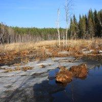 Бобровая плотина :: ann nickolskaya