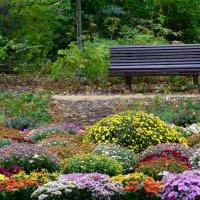 Осень в парке. :: Ольга
