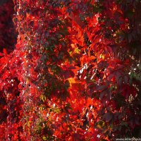 Краски осени :: Dmitry Swanson