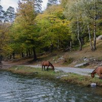 Природа :: Оксана Калинина
