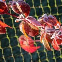 Осенние заморозки :: Mariya laimite