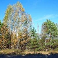 Осень, осень! :: Николай Масляев