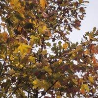 Осенняя листва :: Aнна Зарубина