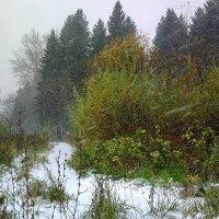Первый снег. :: Валерий Молоток